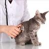 Ветеринарные клиники в Талице
